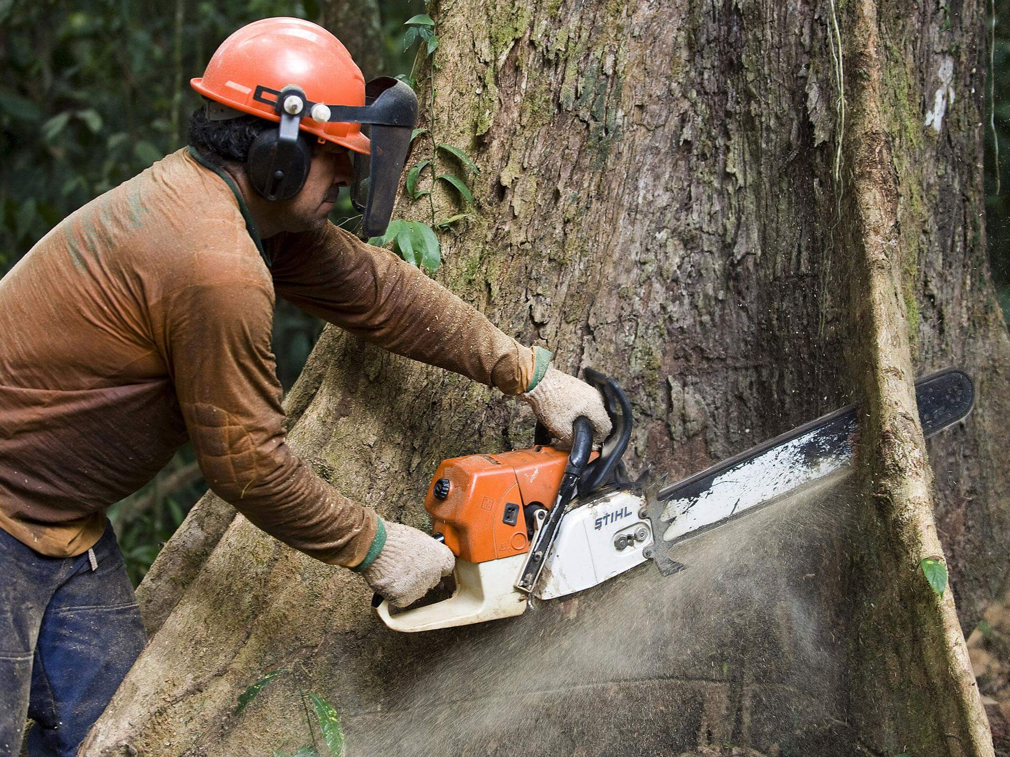 Bartow FL Tree Trimming and Stump Grinding Services Home Page Image-We Offer Tree Trimming Services, Tree Removal, Tree Pruning, Tree Cutting, Residential and Commercial Tree Trimming Services, Storm Damage, Emergency Tree Removal, Land Clearing, Tree Companies, Tree Care Service, Stump Grinding, and we're the Best Tree Trimming Company Near You Guaranteed!