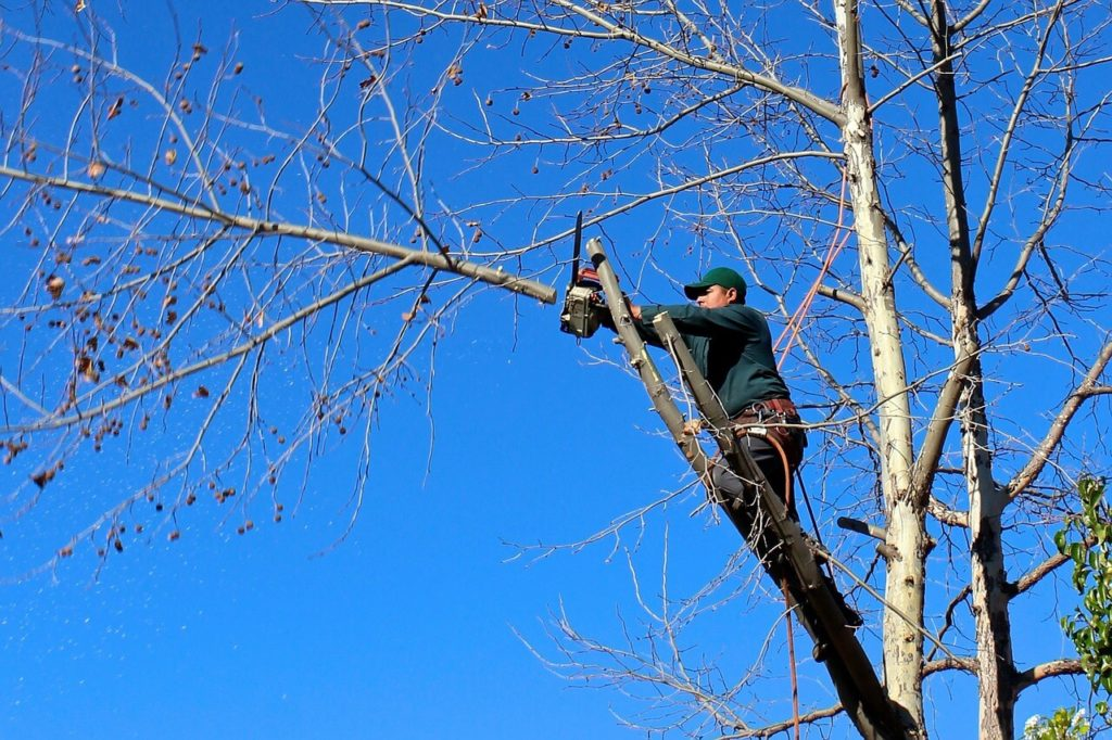 Contact Us-Bartow FL Tree Trimming and Stump Grinding Services-We Offer Tree Trimming Services, Tree Removal, Tree Pruning, Tree Cutting, Residential and Commercial Tree Trimming Services, Storm Damage, Emergency Tree Removal, Land Clearing, Tree Companies, Tree Care Service, Stump Grinding, and we're the Best Tree Trimming Company Near You Guaranteed!
