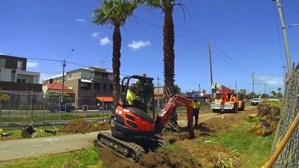 Palm Tree Removal-Bartow FL Tree Trimming and Stump Grinding Services-We Offer Tree Trimming Services, Tree Removal, Tree Pruning, Tree Cutting, Residential and Commercial Tree Trimming Services, Storm Damage, Emergency Tree Removal, Land Clearing, Tree Companies, Tree Care Service, Stump Grinding, and we're the Best Tree Trimming Company Near You Guaranteed!