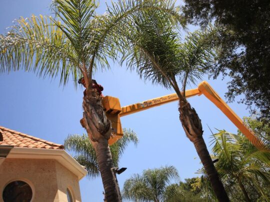 Palm Tree Trimming-Bartow FL Tree Trimming and Stump Grinding Services-We Offer Tree Trimming Services, Tree Removal, Tree Pruning, Tree Cutting, Residential and Commercial Tree Trimming Services, Storm Damage, Emergency Tree Removal, Land Clearing, Tree Companies, Tree Care Service, Stump Grinding, and we're the Best Tree Trimming Company Near You Guaranteed!