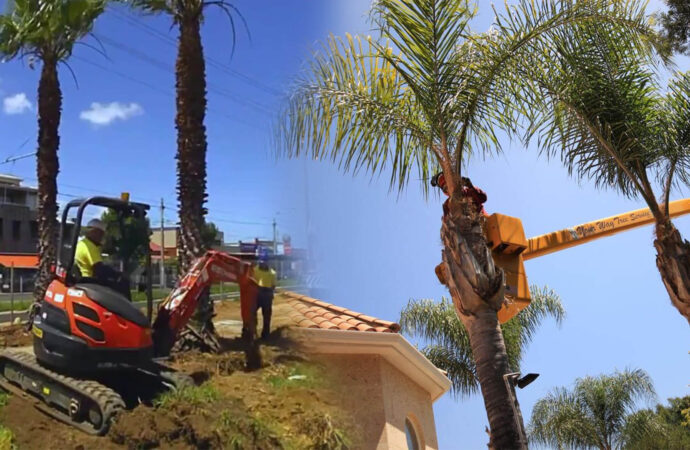 Palm tree trimming & palm tree removal-Bartow FL Tree Trimming and Stump Grinding Services-We Offer Tree Trimming Services, Tree Removal, Tree Pruning, Tree Cutting, Residential and Commercial Tree Trimming Services, Storm Damage, Emergency Tree Removal, Land Clearing, Tree Companies, Tree Care Service, Stump Grinding, and we're the Best Tree Trimming Company Near You Guaranteed!