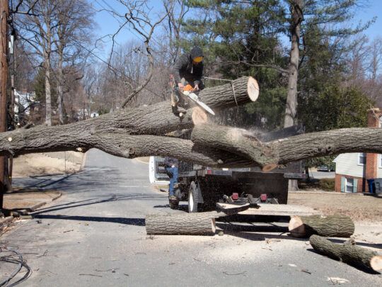 Residential Tree Services-Bartow FL Tree Trimming and Stump Grinding Services-We Offer Tree Trimming Services, Tree Removal, Tree Pruning, Tree Cutting, Residential and Commercial Tree Trimming Services, Storm Damage, Emergency Tree Removal, Land Clearing, Tree Companies, Tree Care Service, Stump Grinding, and we're the Best Tree Trimming Company Near You Guaranteed!