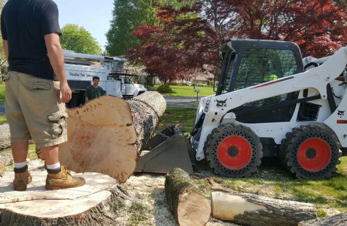 Services-Bartow FL Tree Trimming and Stump Grinding Services-We Offer Tree Trimming Services, Tree Removal, Tree Pruning, Tree Cutting, Residential and Commercial Tree Trimming Services, Storm Damage, Emergency Tree Removal, Land Clearing, Tree Companies, Tree Care Service, Stump Grinding, and we're the Best Tree Trimming Company Near You Guaranteed!