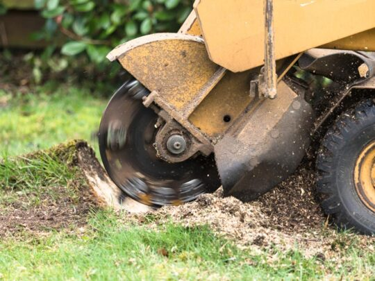 Stump Grinding-Bartow FL Tree Trimming and Stump Grinding Services-We Offer Tree Trimming Services, Tree Removal, Tree Pruning, Tree Cutting, Residential and Commercial Tree Trimming Services, Storm Damage, Emergency Tree Removal, Land Clearing, Tree Companies, Tree Care Service, Stump Grinding, and we're the Best Tree Trimming Company Near You Guaranteed!
