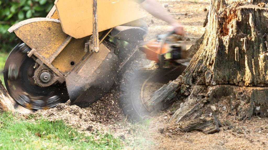 Stump grinding & removal-Bartow FL Tree Trimming and Stump Grinding Services-We Offer Tree Trimming Services, Tree Removal, Tree Pruning, Tree Cutting, Residential and Commercial Tree Trimming Services, Storm Damage, Emergency Tree Removal, Land Clearing, Tree Companies, Tree Care Service, Stump Grinding, and we're the Best Tree Trimming Company Near You Guaranteed!