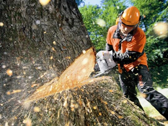 Tree Cutting-Bartow FL Tree Trimming and Stump Grinding Services-We Offer Tree Trimming Services, Tree Removal, Tree Pruning, Tree Cutting, Residential and Commercial Tree Trimming Services, Storm Damage, Emergency Tree Removal, Land Clearing, Tree Companies, Tree Care Service, Stump Grinding, and we're the Best Tree Trimming Company Near You Guaranteed!