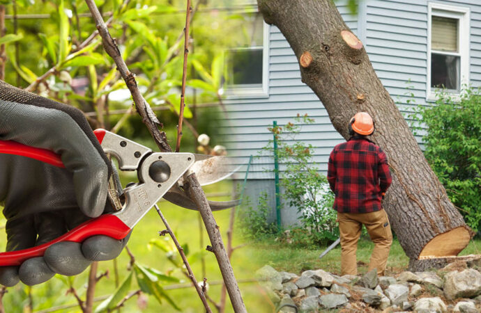 Tree pruning & tree removal-Bartow FL Tree Trimming and Stump Grinding Services-We Offer Tree Trimming Services, Tree Removal, Tree Pruning, Tree Cutting, Residential and Commercial Tree Trimming Services, Storm Damage, Emergency Tree Removal, Land Clearing, Tree Companies, Tree Care Service, Stump Grinding, and we're the Best Tree Trimming Company Near You Guaranteed!